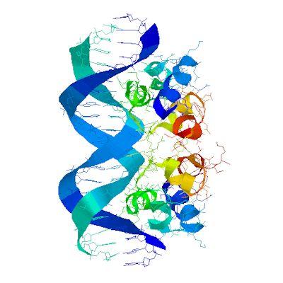 Molecular Visualization @ Viral DNA·Protein Complex